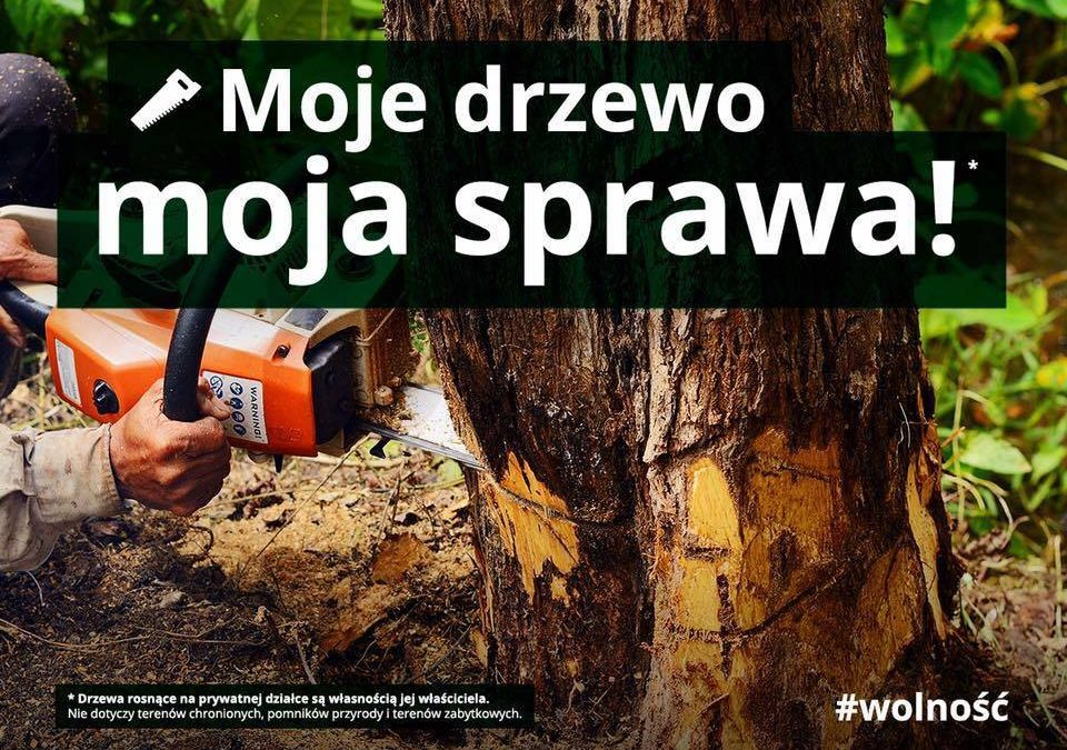 Czego NIE WIDAĆ w sprawie wycinki drzew